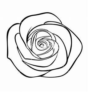 57 best rose drawinds images on Pinterest | Branding, Coat ...
