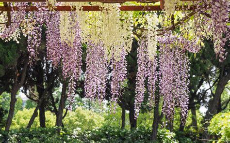 Top 10 Cottage Garden Favourites  The English Garden