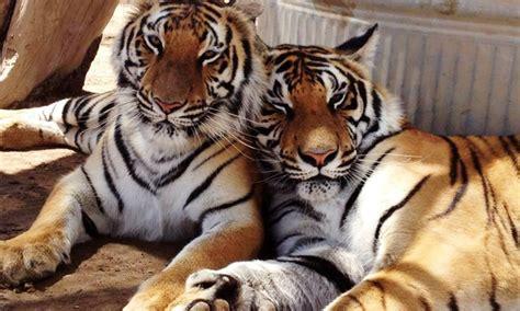 animal sanctuary tours  wild exotic animal