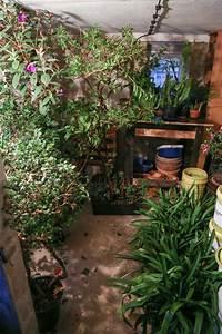 Hortensien überwintern Im Keller : garten abernten k belpflanzen einwintern majas ~ Lizthompson.info Haus und Dekorationen