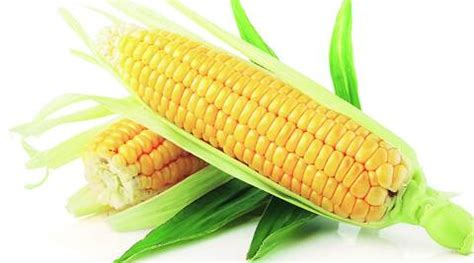 On and off goes maize in Punjab | The Indian Express