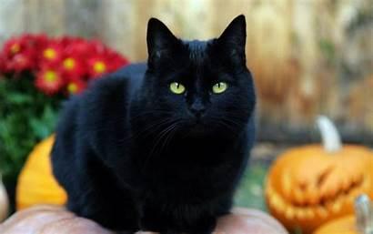 Gato Negro Halloween Fondos Pantalla
