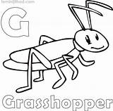 Grasshopper Coloring Printable Drawing Colouring Lovesmag Getcolorings sketch template