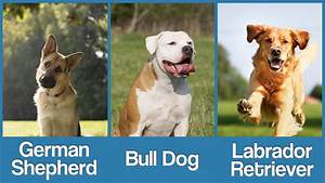 Which Dog Breed Is More Likely To Have Hip Dysplasia