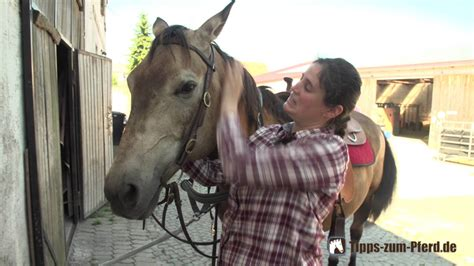 pferd auftrensen mit western trense aufzaeumen youtube