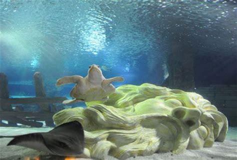 mall of america aquarium minnesota going going g o