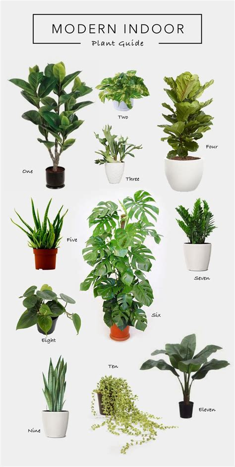 decorating  nature plants small living room layout