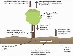 Agriculture  Climate Change And Carbon Sequestration