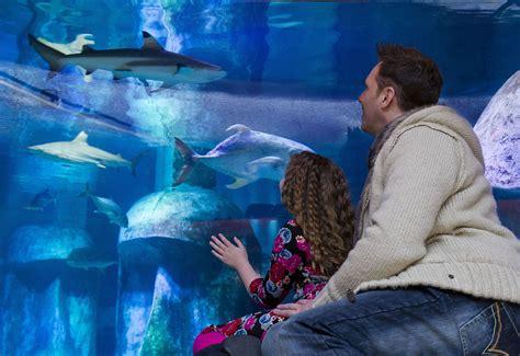 sea aquarium tickets opening times pictures