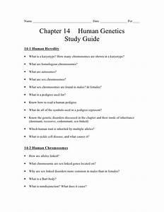 Biology - Chp 14 - Human Genetics