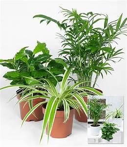 Zimmerpflanzen Die Direkte Sonne Vertragen : zimmerpflanzen mix tropic 3pflanzen g nstig online kaufen mein sch ner garten shop ~ Markanthonyermac.com Haus und Dekorationen