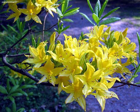 sfondi primavera fiori immagini sfondo fiori primavera disegni di natale 2019
