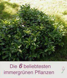 Baum Vorgarten Immergrün : 6 beliebte immergr ne pflanzen f r den garten ~ Michelbontemps.com Haus und Dekorationen