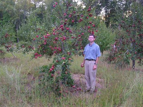 kinnairds choice david vernon owner  century farm