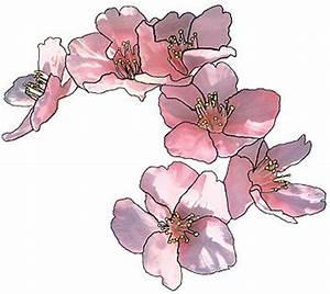 Tattoo Fleur De Cerisier : fleurs de cerisier tatouage ~ Melissatoandfro.com Idées de Décoration