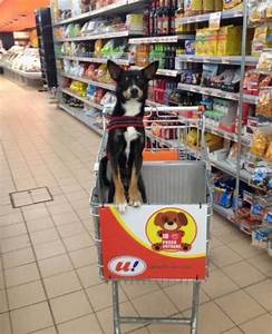 A supermarket in italy introduces dog friendly carts so for Dog friendly grocery stores