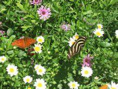 1000 images about arizonian gardens on pinterest for Phoenix butterfly garden