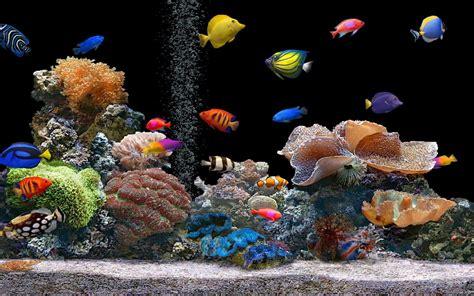 fond d ecran aquarium vivant gratuit fond d 233 crans