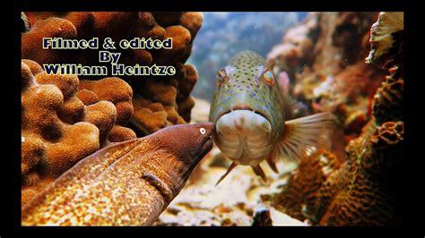 eel hunting moray eyed