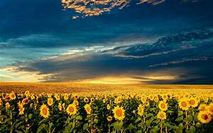 Beautiful, Spring, Wallpapers, Pictures, Images