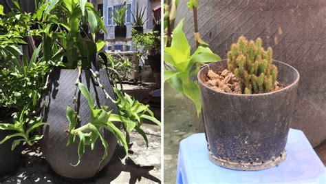 Neumáticos Reciclados 20 Ideas Para Maceteros De Jardín