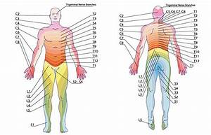 Locating and Alleviating Pain with the Dermatome Chart & E ...