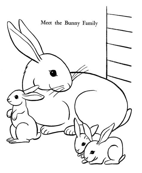 real bunny coloring pages   print