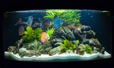 discus fish fish laboratory
