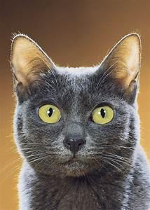 Success Secrets Of A Famous Cat Photographer