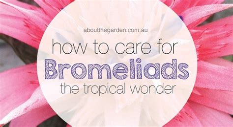 How To Care For Bromeliads  About The Garden  About The