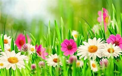 Spring Flowers Wallpapers Screensavers Desktop Mobile