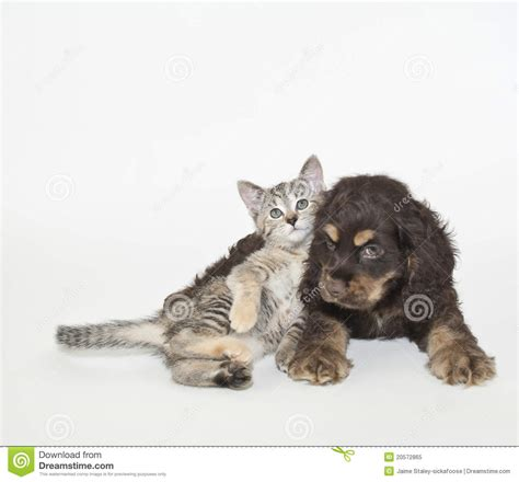 sweet puppy  kitten stock image image