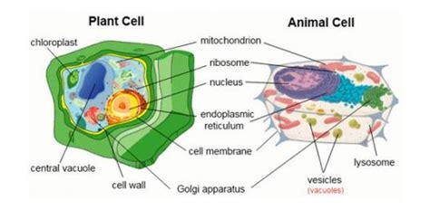 animal  plant cells proprofs quiz