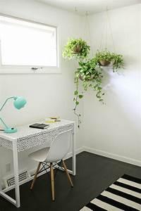 6, Ways, To, Include, Indoor, Vines, In, Your, Interior
