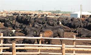 Can history tell us anything about live export prospects ...