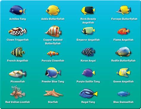 fish names saltwater fish names hawaiian reef fish guide types of fish hawaiian names 2017 fish tank