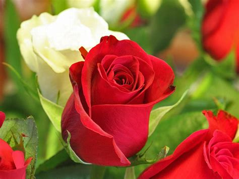 Check spelling or type a new query. 30 Beautiful Flower Images Free To Download in 2020 ...