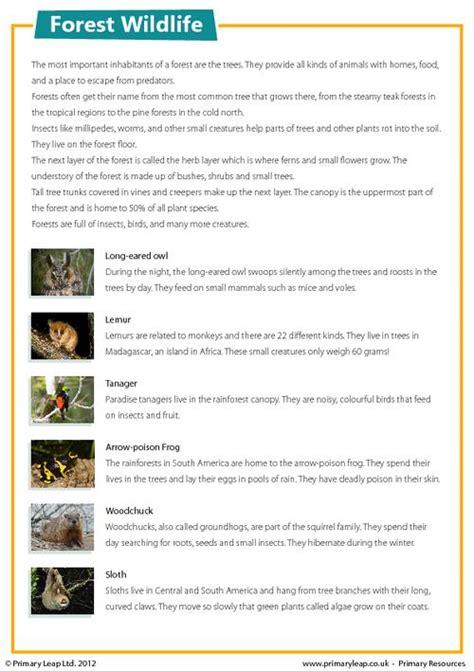 forest wildlife comprehension