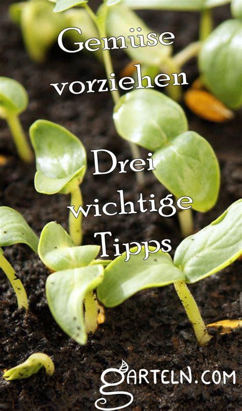ab wann kann stauden pflanzen ab februar kann dann die erste aussaat im gew 228 chshaus oder auf der fensterbank erfolgen was