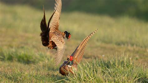 calendario venatorio dellemilia romagna ecco date novita caccia