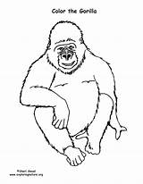 Gorilla Coloring Gorillas Sponsors Wonderful Support Please sketch template