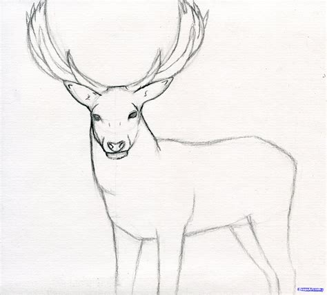 draw  stag deer stag step  step forest