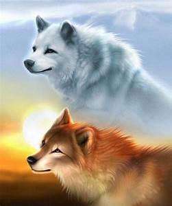 Bébé Loup Blanc : loups page 9 ~ Farleysfitness.com Idées de Décoration