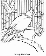 Coloring Bird Zoo Animals Cage Birds Printable Animal Sheets Aviary Drawing Sheet Activity Cartoon Cages Honkingdonkey Dance Children Wild Getdrawings sketch template