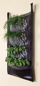 Indoor hanging herb garden indoor hanging planters for Hanging herb garden indoor