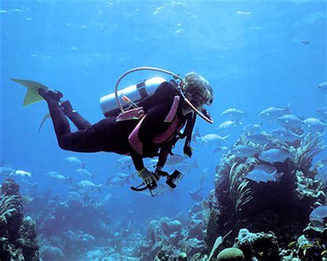 bermuda diving bermuda scuba diving