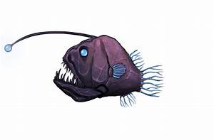 Image - Angler Fish.png | Aquaria Wiki | FANDOM powered by ...