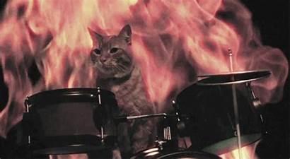 Cat Metal Gifs Drums Brutal Fucking