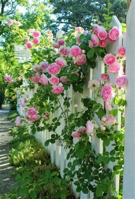 Best 25+ Ground Cover Roses Ideas On Pinterest Shade