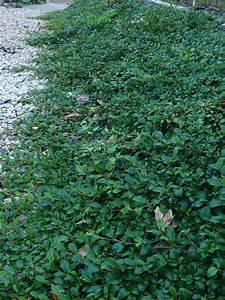 Cultiver Des Champignons De Paris Sans Kit : plantes couvre sol pour talus plante couvre sol un tableau de couleurs naturelles dans votre ~ Melissatoandfro.com Idées de Décoration